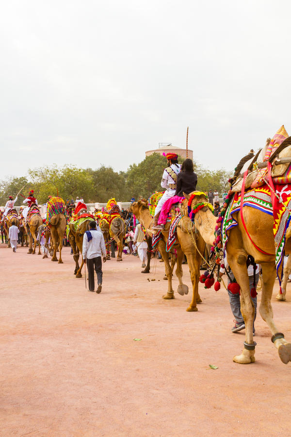 Camel procession royalty free stock photography