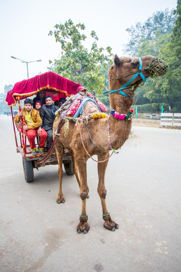 A camel pulled taxi royalty free stock photos