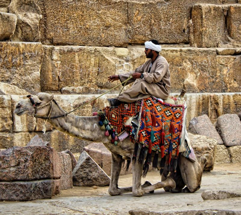 Camel in the pyramid stock photography