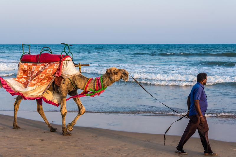 Camel for ride on beach royalty free stock photos