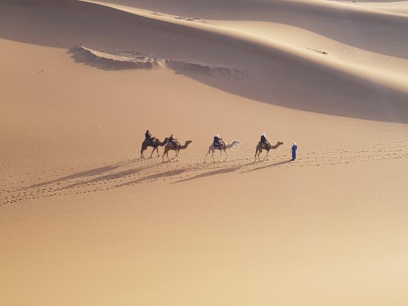 Camel ride through desert royalty free stock image