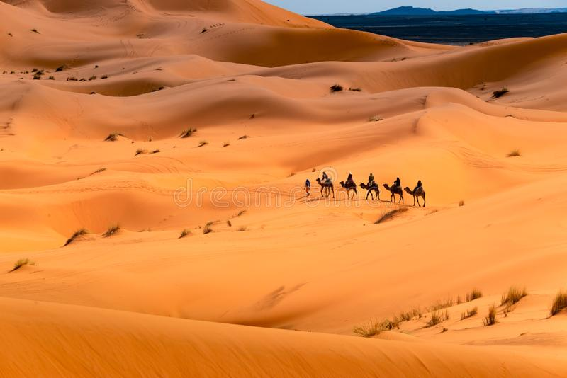 Camel ride through the desert stock images