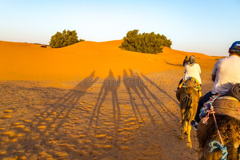 Camel Ride in the Desert stock photos