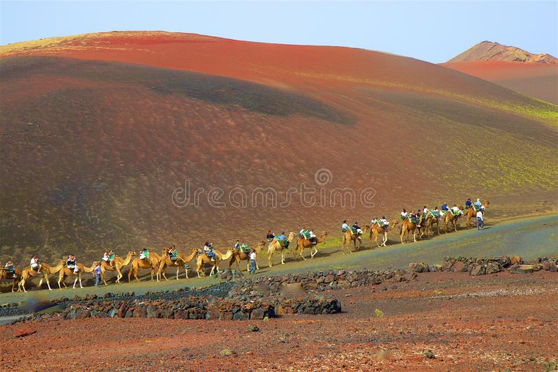 Camel ride within an excursion in Lancarote, Canary islands. Tourists riding camels in Lanzarote, Canaries