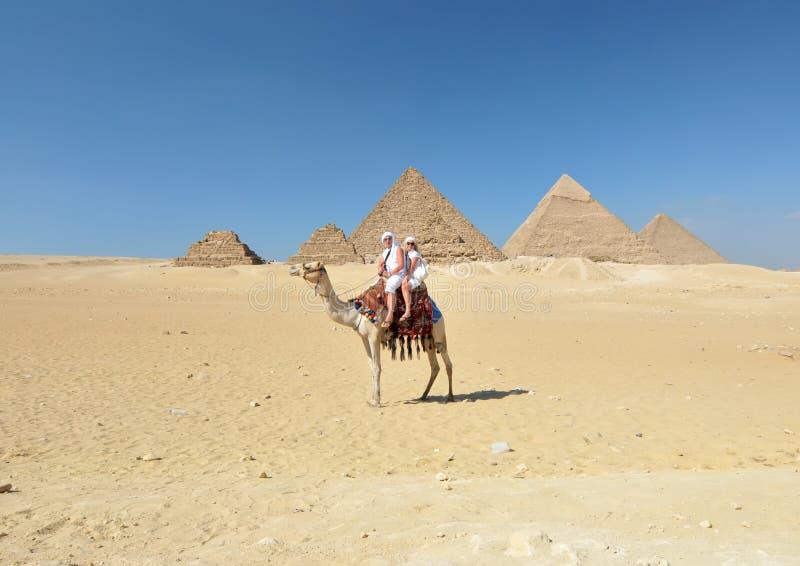 Camel ride by Giza pyramids stock photo