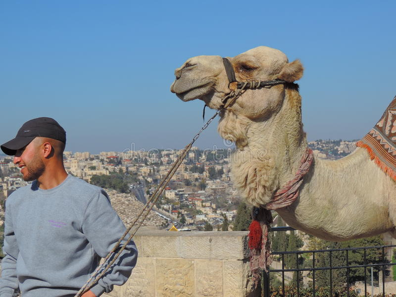 Camel ride on Mount of Olives stock photography