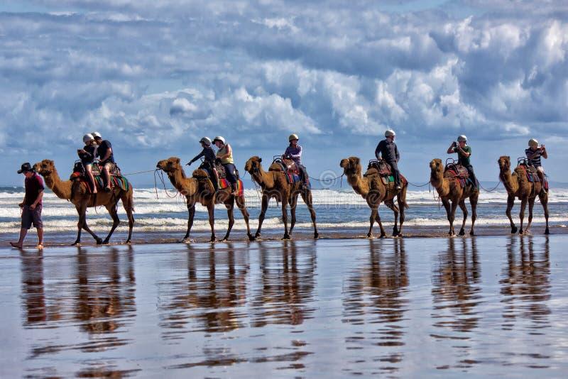 Camel ride stock photo