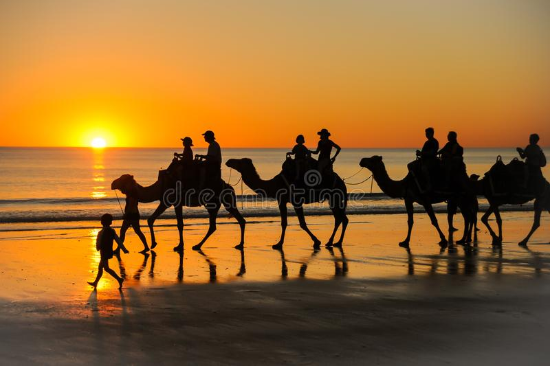 Camel ride into the sunset royalty free stock photo