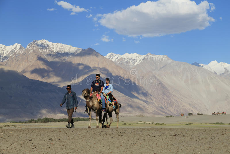 Camel riding at Hunder village in Himalayas, Nubra Valley, Ladak royalty free stock images