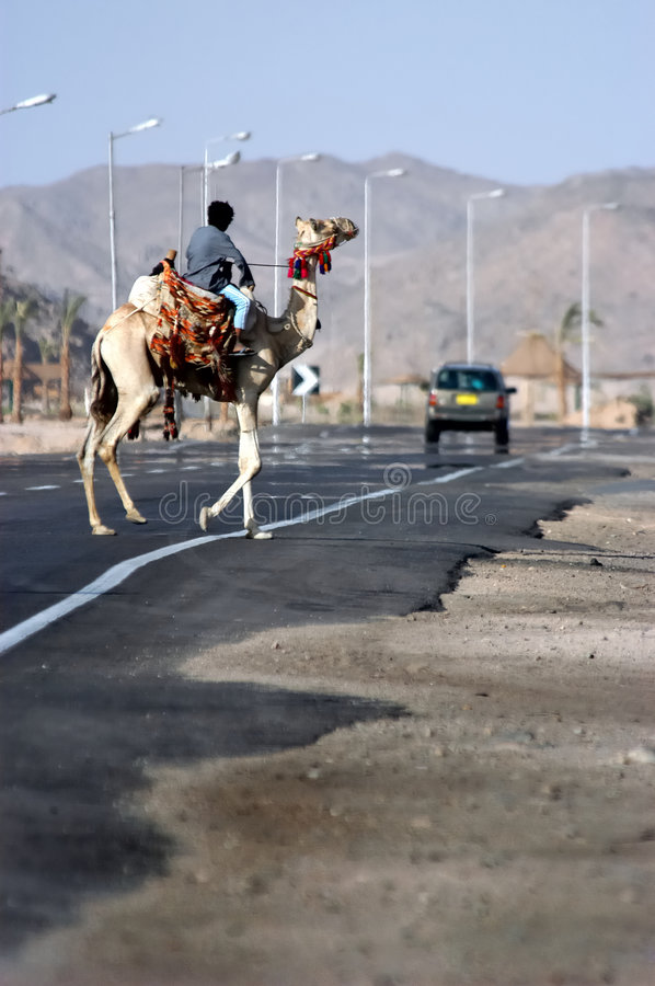 Download Camel road crossing stock image. Image of movement, desert - 4015199