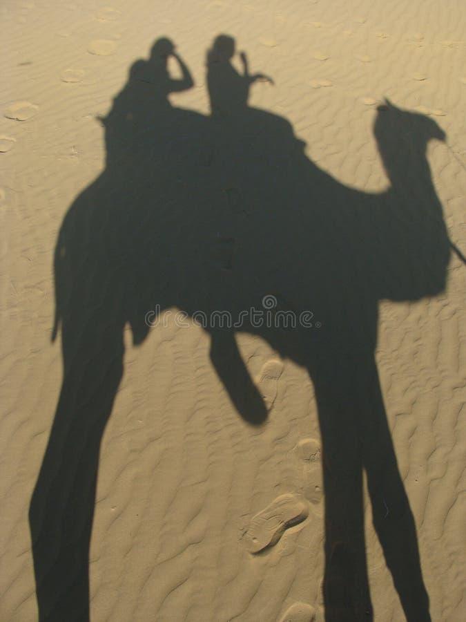 Camel Safari stock photos