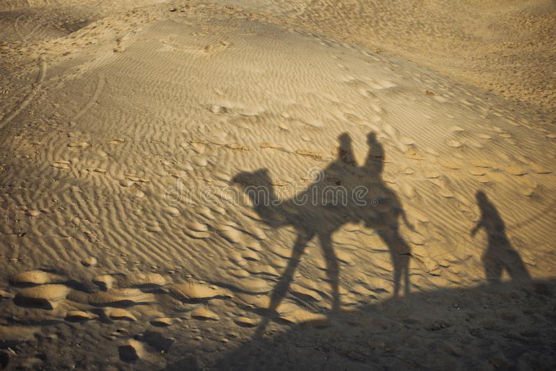 Camel shadow in sand stock photography