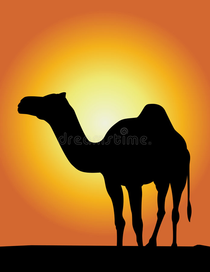 Camel Silhouette ! royalty free illustration