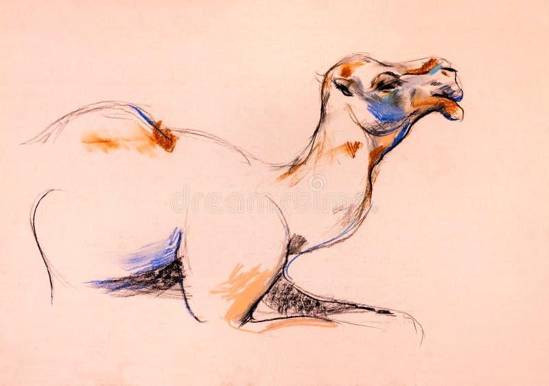 Download Camel sketch stock illustration. Image of indian, mammal - 26669548