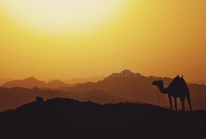 Camel, Sky, Sunrise, Camel Like Mammal Free Public Domain Cc0 Image