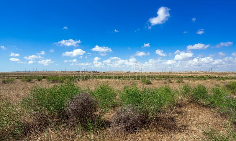 Camel thorn bushes  in the steppe. Scenery royalty free stock image