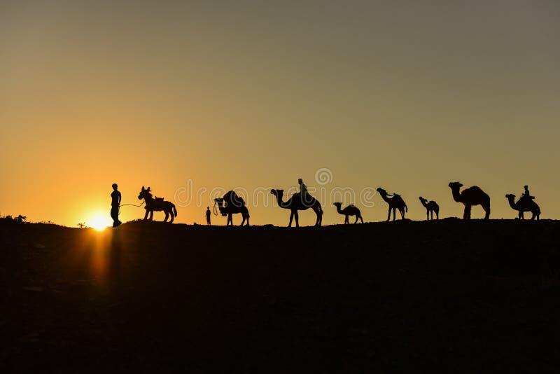 Camel train. Train laden camel train camel train desert mammal nature sunrise stock photos