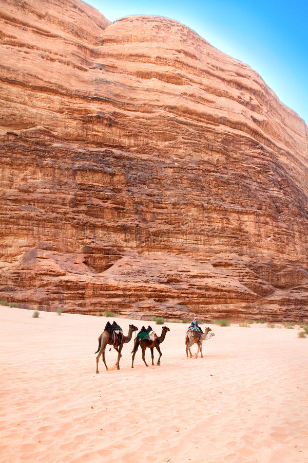 Camel trip through siq Um Tawaqi, Wadi Rum, Jordan royalty free stock images