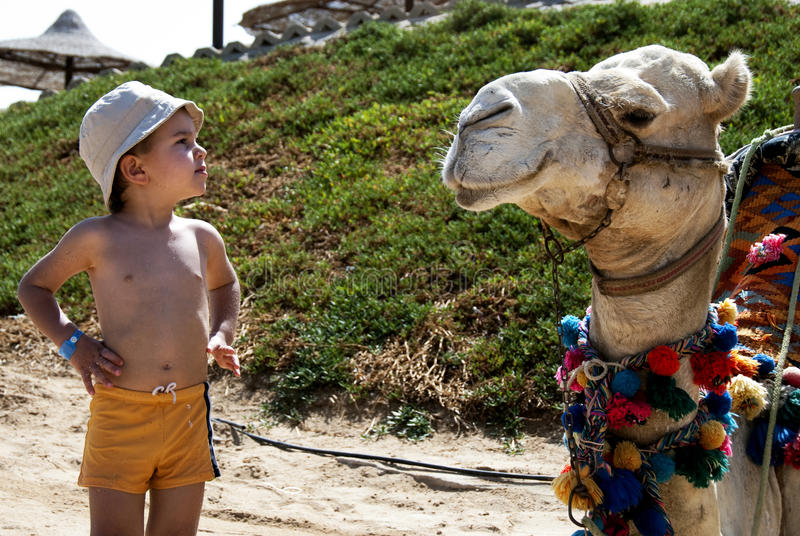 The camel whisperer. A young boy talking to a camel in the beach royalty free stock photos