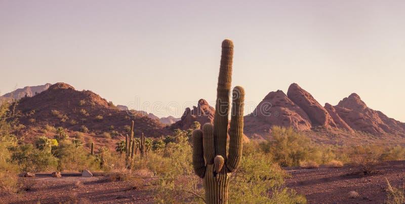 Camelbackberget som ses från Papago, parkerar Phoenix Arizona royaltyfria bilder