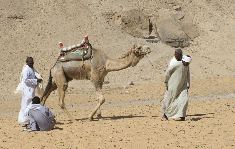 Cameldrivers egipcio 1 imágenes de archivo libres de regalías