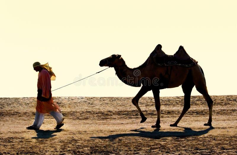 Cameleer fotos de stock
