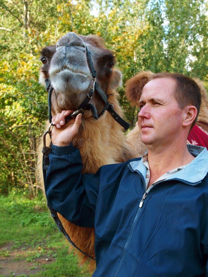 cameleer royaltyfri foto