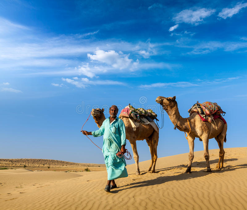 Cameleer (camel driver) with camels in dunes of Thar desert. Rajasthan, India. Rajasthan travel background - Indian cameleer (camel driver) with camels in dunes stock images