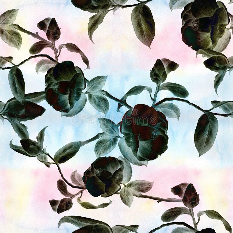 Camelia - flores, brotes y hojas - en un fondo de la acuarela Collage de flores, de hojas y de brotes en un fondo de la acuarela  stock de ilustración