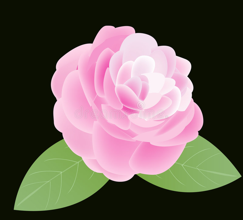 camellia royaltyfri illustrationer