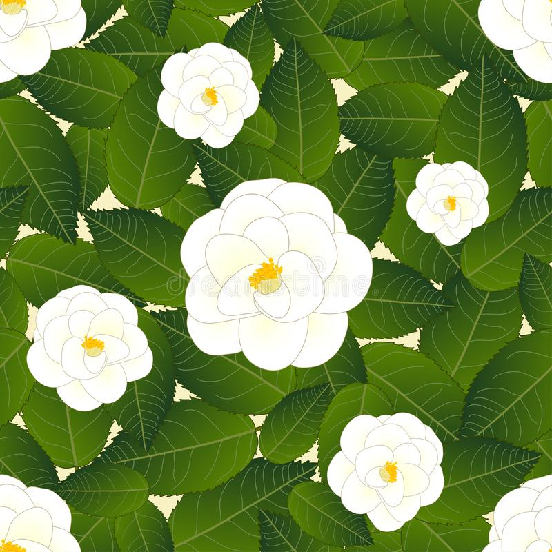 Camellia Flower blanche sur le fond beige en ivoire Illustration de vecteur illustration de vecteur