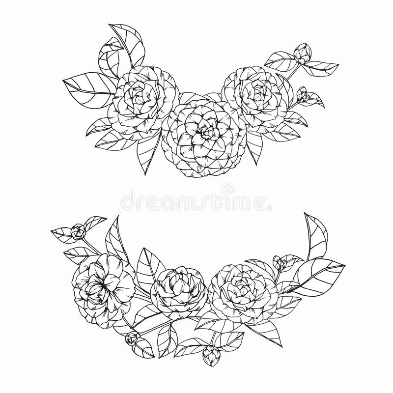 Camellia Flower Line Drawing : Camellia flowers drawing and sketch with line art on white