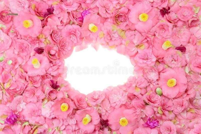 Download Camellia frame stock photo. Image of petal, frame, over - 30543750
