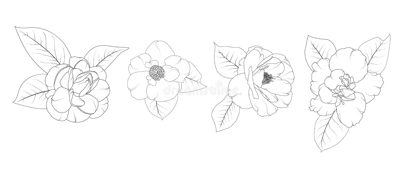 Camellia Japonica flower set isolated. stock illustration