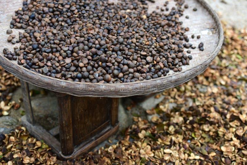 Camellia Oil-zaad stock afbeeldingen
