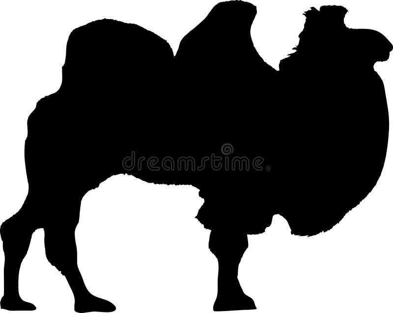 Camello libre illustration