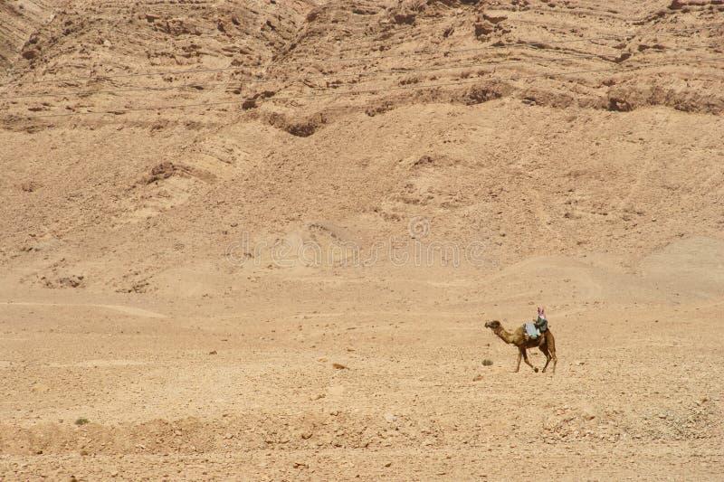 Download Camello foto de archivo. Imagen de caminata, eastern, recorrido - 7279952