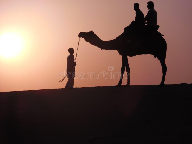 Camello en desierto durante puesta del sol fotos de archivo