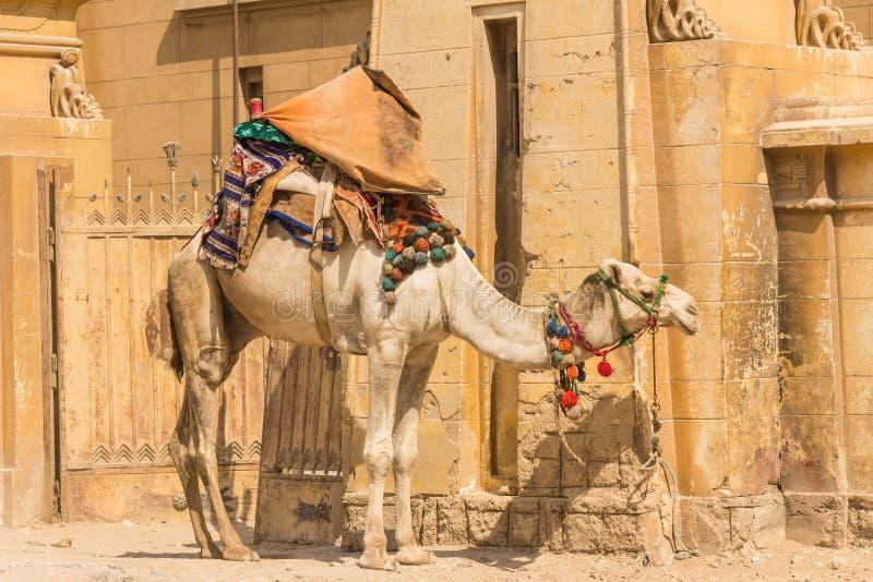 Download Camello En La Pirámide De Giza, El Cairo En Egipto Foto de archivo - Imagen de camellos, historia: 42428846