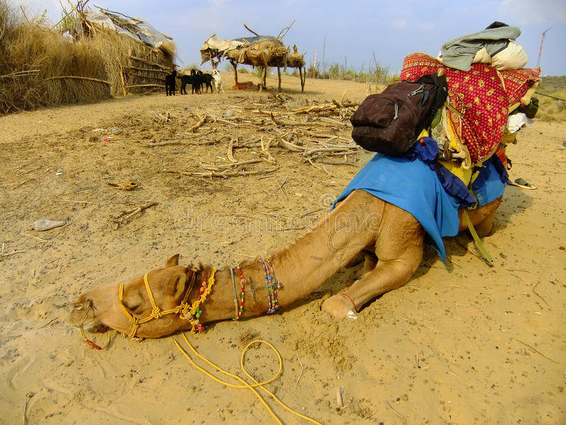 Camello que descansa durante safari del camello, desierto de Thar, la India foto de archivo