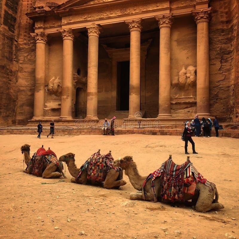 Camellos de Jordan Petra imagenes de archivo