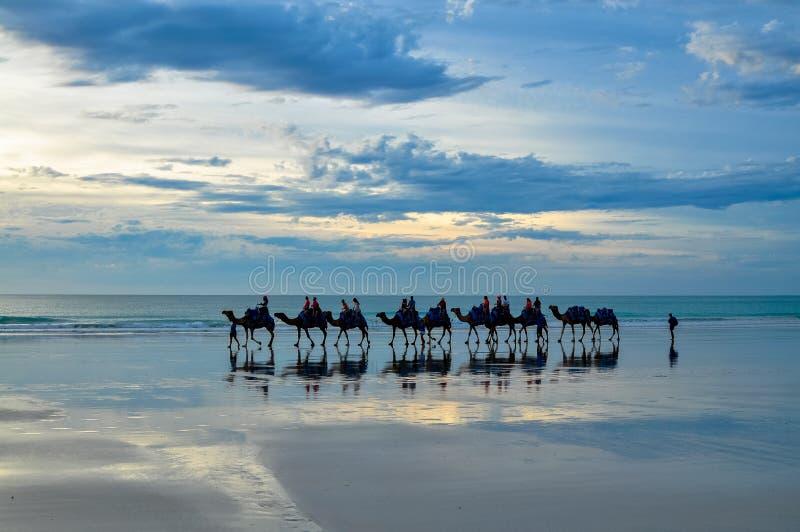 Camellos de la playa del cable fotos de archivo