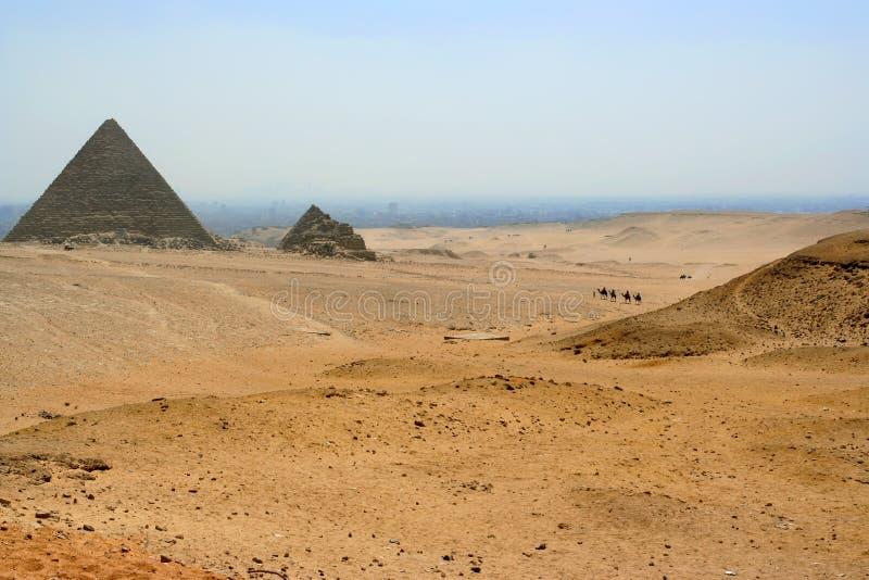 Camellos en el desierto fotografía de archivo libre de regalías