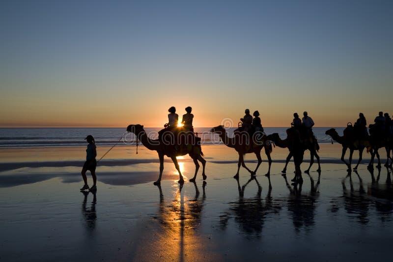 Camellos en la playa, Broome, Australia occidental imagenes de archivo