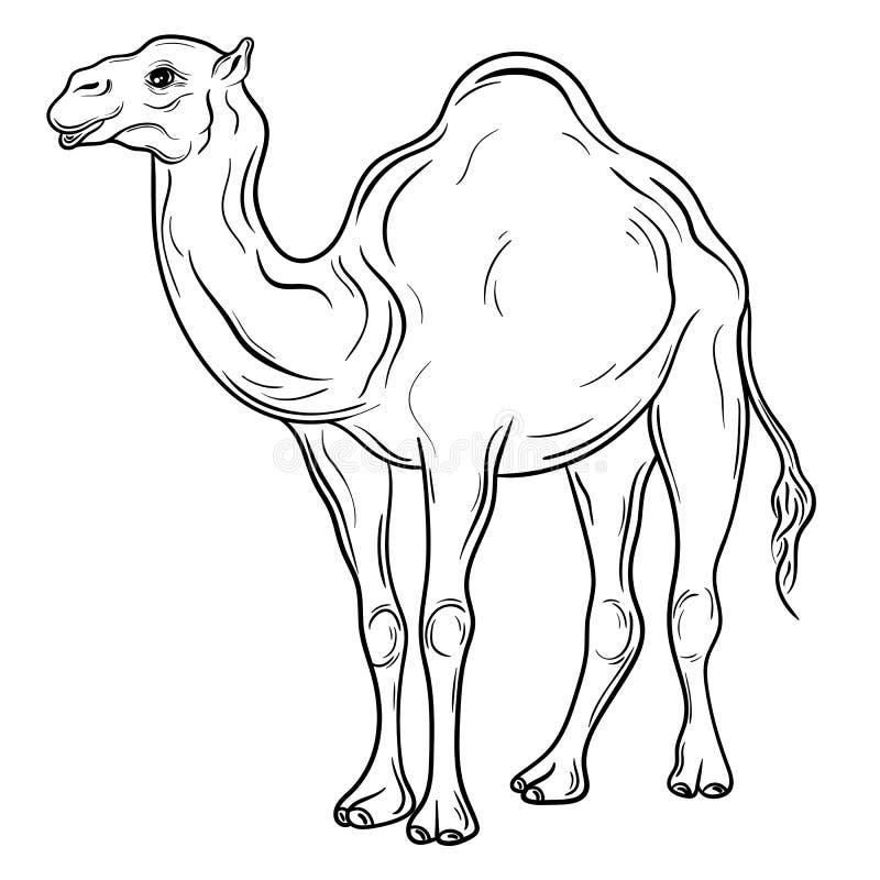 Camelo ilustração stock