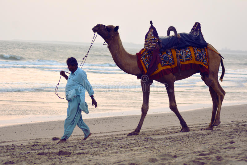 Camelo da tração da pessoa na praia/Mandvi, Kutch, Índia Pessoa local foto de stock royalty free