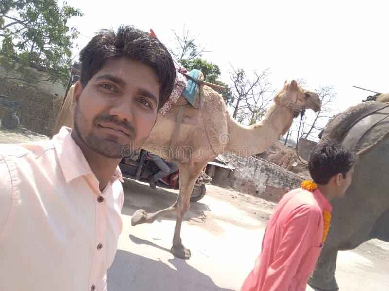 Camelo e elefante fotos de stock royalty free