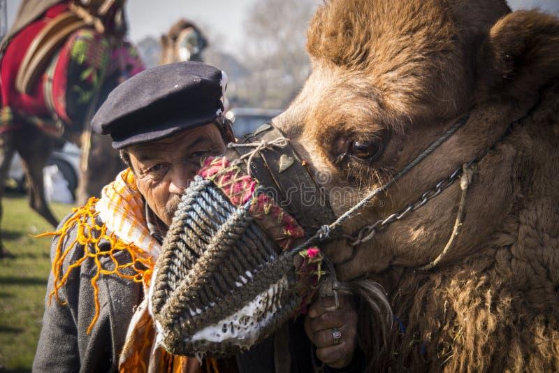 Camelo e homem foto de stock