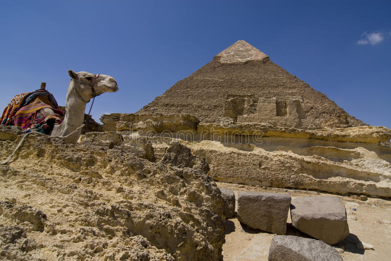 Camelo e pirâmide imagem de stock royalty free