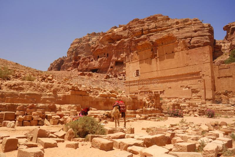 Camelo na cidade antiga de Petra Jordan fotografia de stock